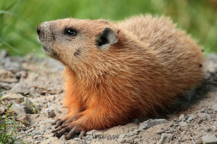 Editorial: Why Are There No Country Songs About Groundhog Day?